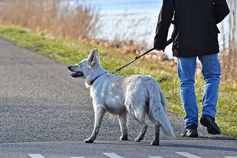 Bindungsfördernde Hundewanderung Kurs