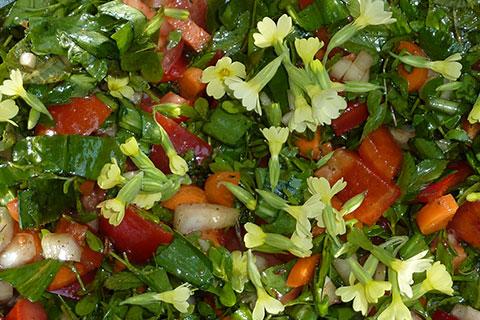 Kräuter und Heilpflanzen Ausbildung Kräuter Salat machen
