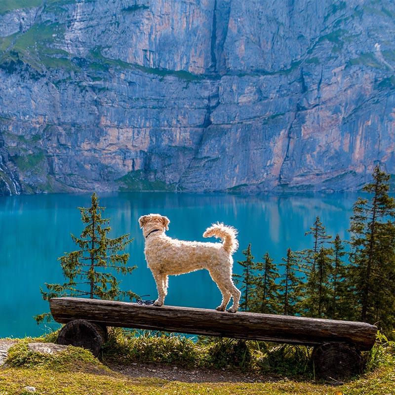 Hundetraining Kurs in Bayern