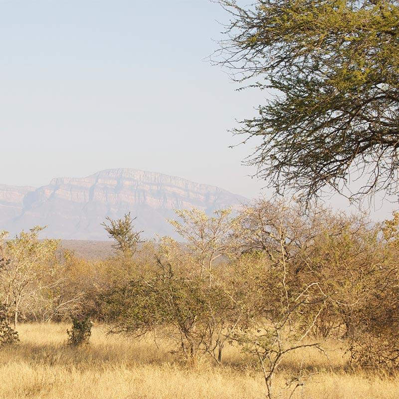 Naturwissen und Übergangsrituale der Zulus