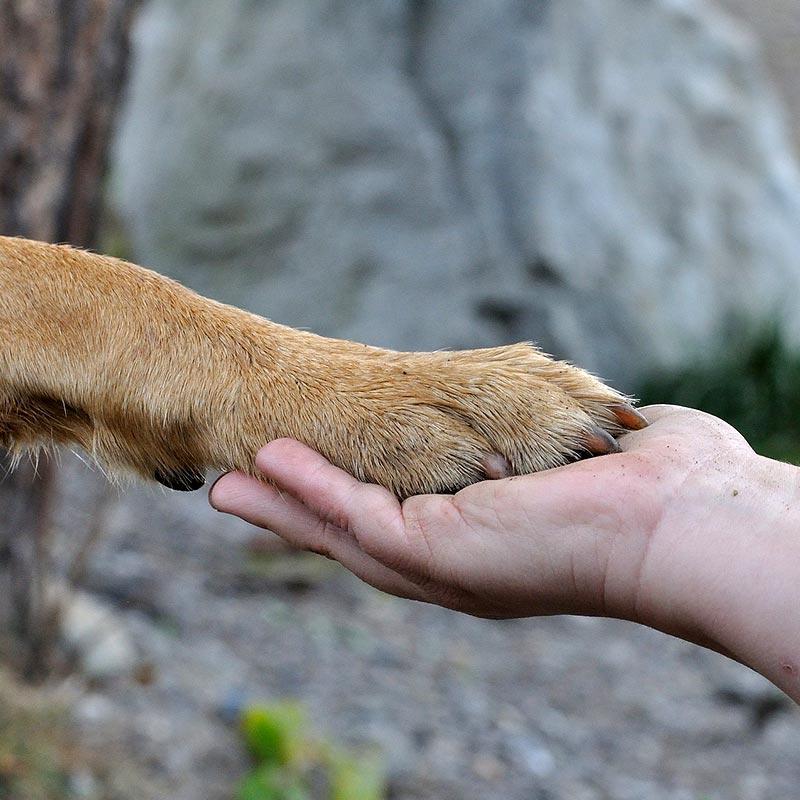 Tiergestützte Erlebnispädagogik Ausbildung
