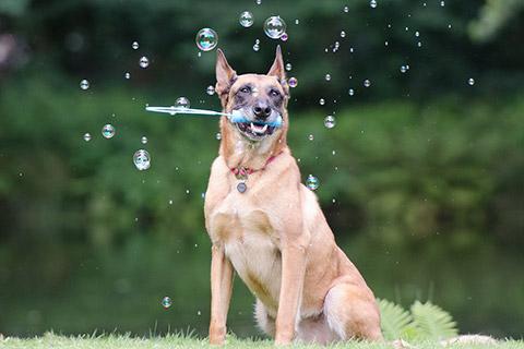 Tiergestützte Erlebnispädagogik Ausbildung - Wahrnehmungsschulung mit Hunden