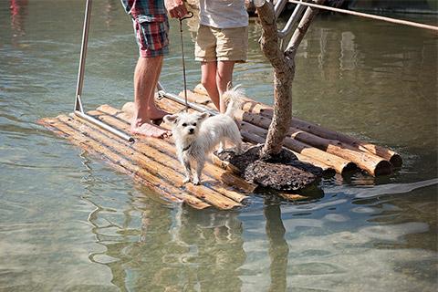 Tiergestützte Erlebnispädagogik Ausbildung - Naturerfahrung mit Hunden