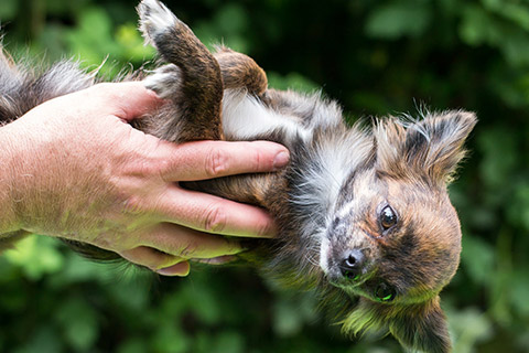 Tiergestützte Erlebnispädagogik Ausbildung - Vertrauens-Aktionen