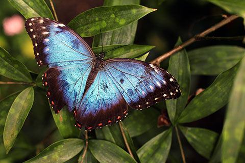 Visionssuche und Vision Quest Schmetterling Bläuling