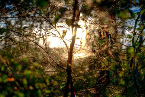 Visionssuche und Vision Quest webendes Spinnennetz