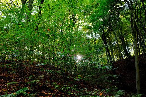 Wildnisreise nach Rumänien - Nebel im Wald
