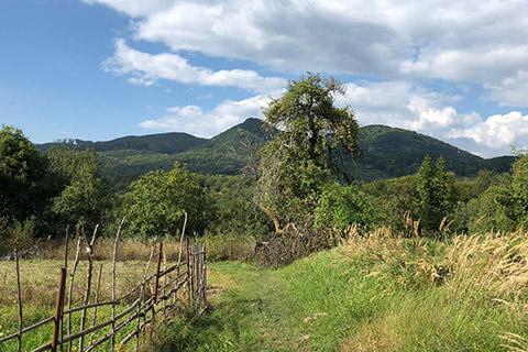 Wildnisreise nach Rumänien - Eule